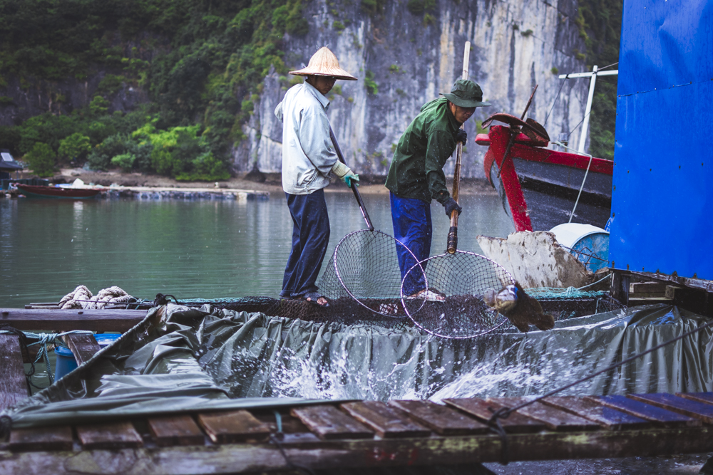 DSC_0704-2_halong_bay_vietnam