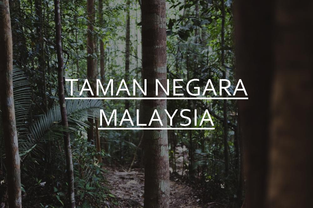 DSC_02699_taman_negara_malaysia