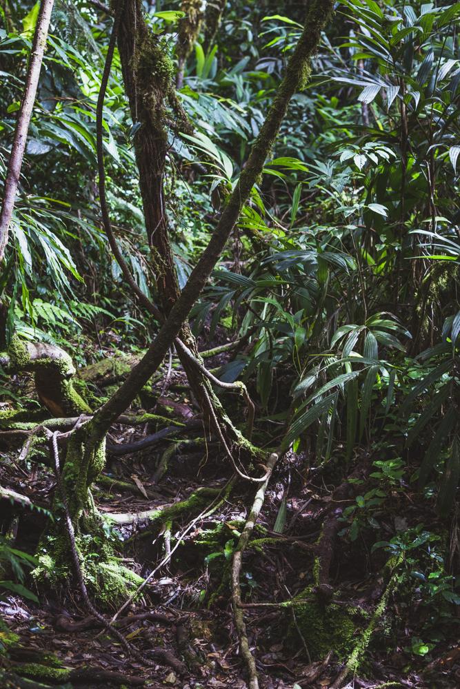 DSC_0889_cameron_highlands_malaysia