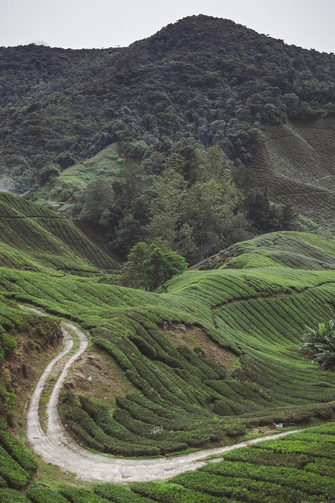DSC_1000_cameron_highlands_malaysia