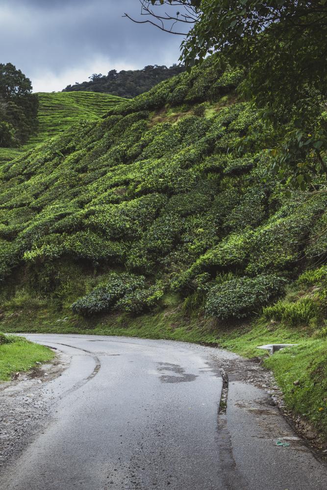 DSC_1013_cameron_highlands_malaysia