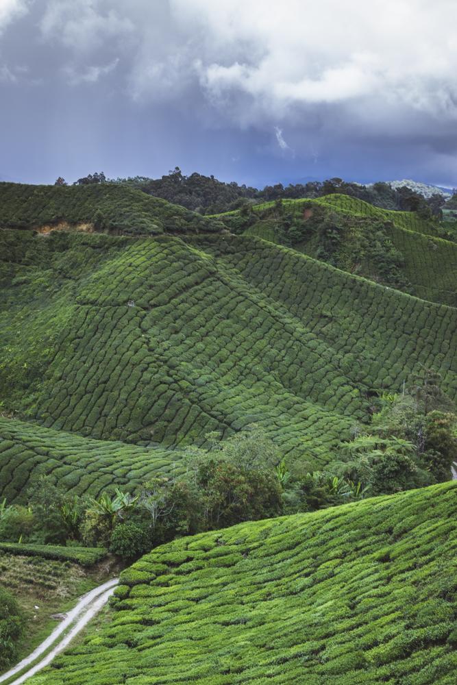 DSC_1029_cameron_highlands_malaysia