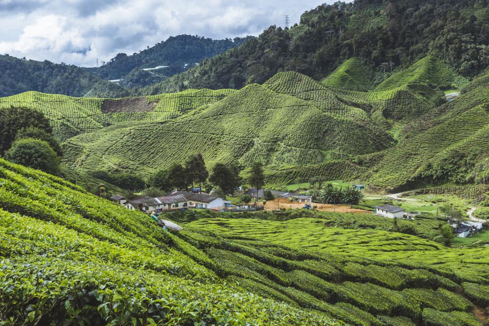 DSC_1035_cameron_highlands_malaysia