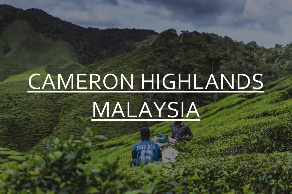 DSC_10633_cameron_highlands_malaysia