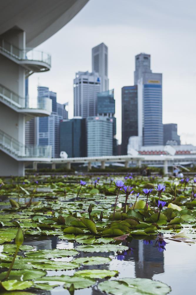 DSC_0391_singapore