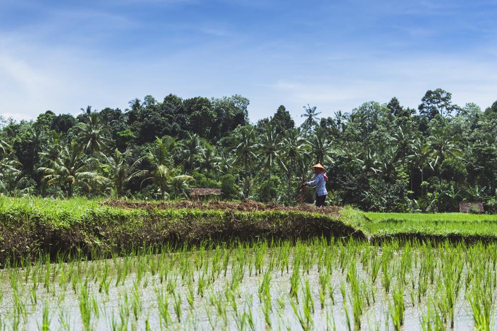 DSC_0643_licin_indonesia