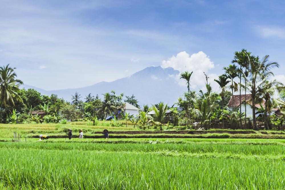 DSC_0666_licin_indonesia