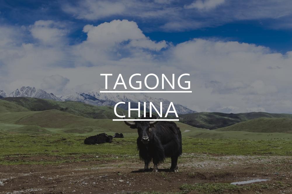 DSC_10110_tagong_china